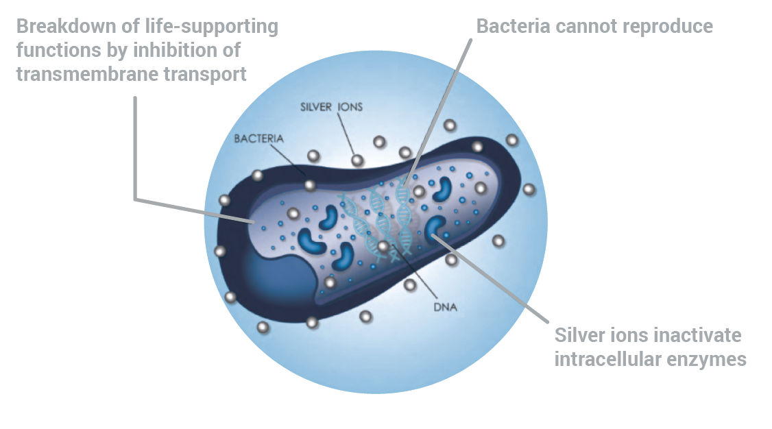 how metal ions kill bacteria